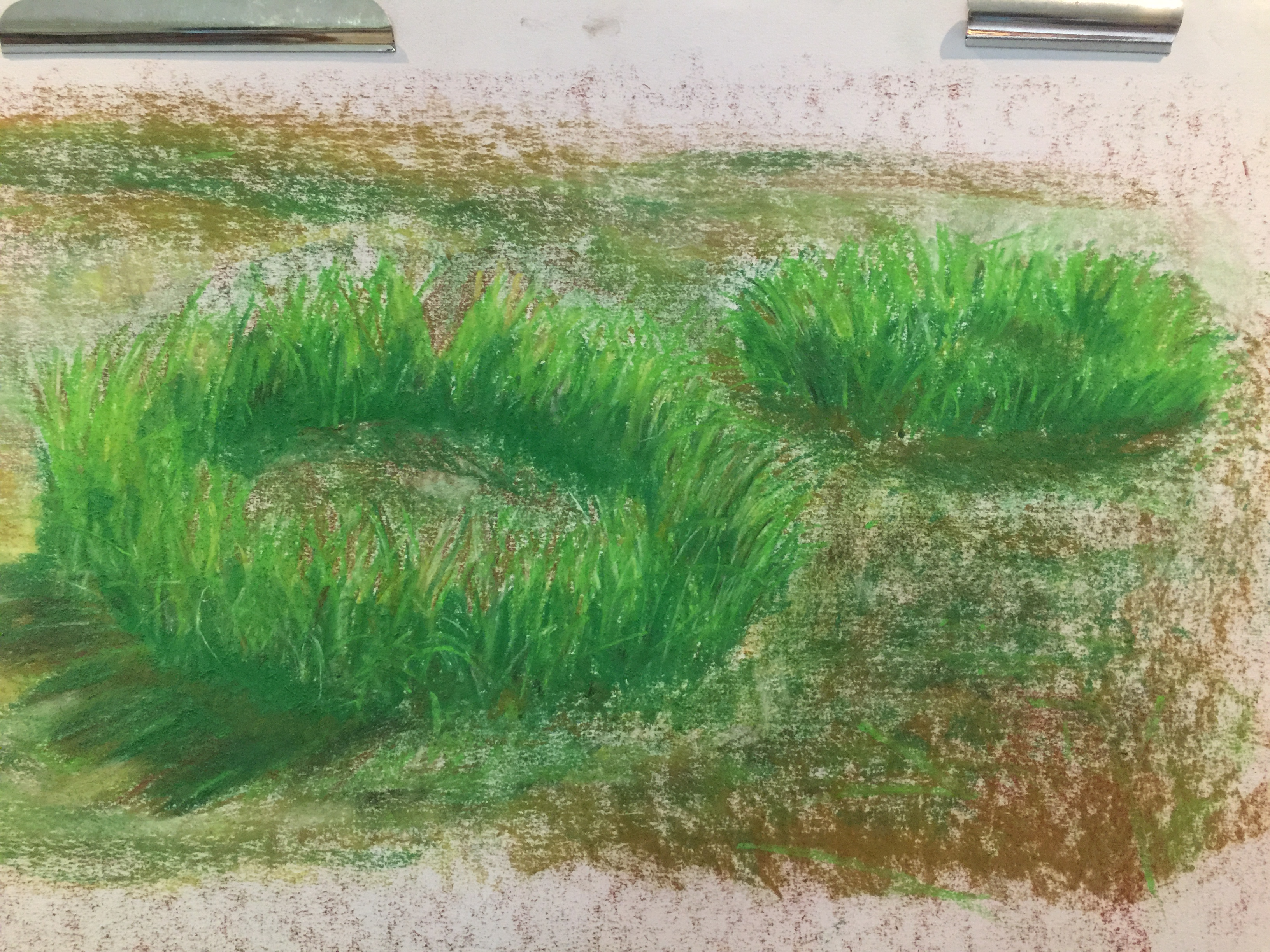 Grass circles in pastel