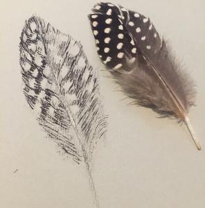 monochrome feather