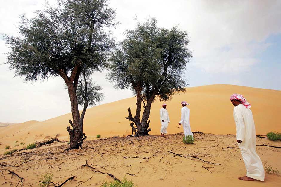 ghaf trees