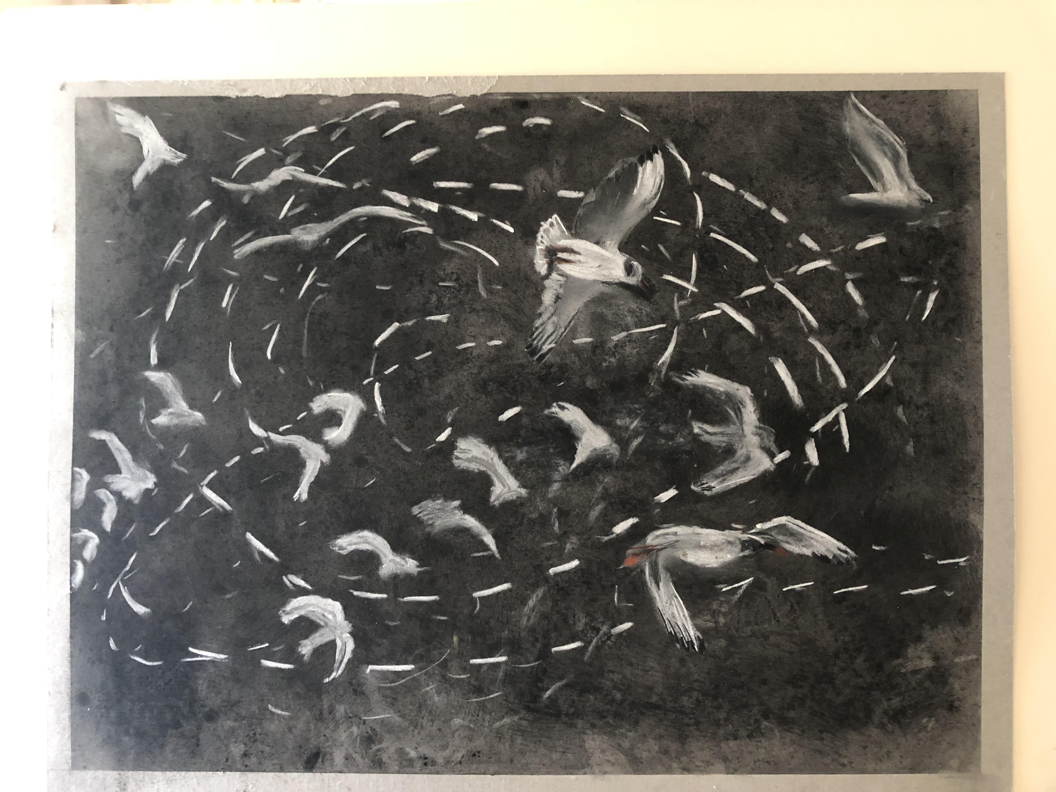 Gulls migrating charcoal