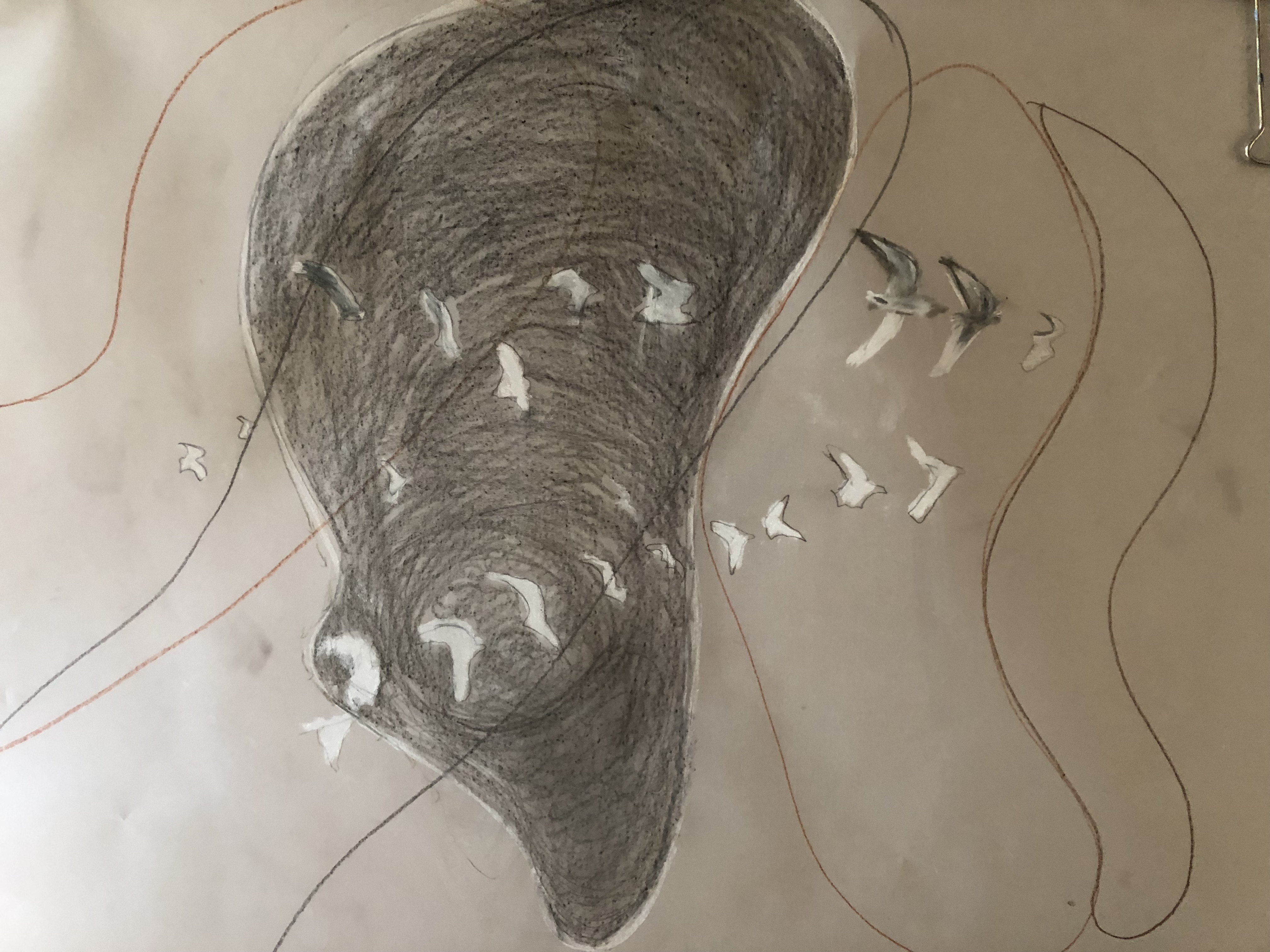 gulls on vellum paper