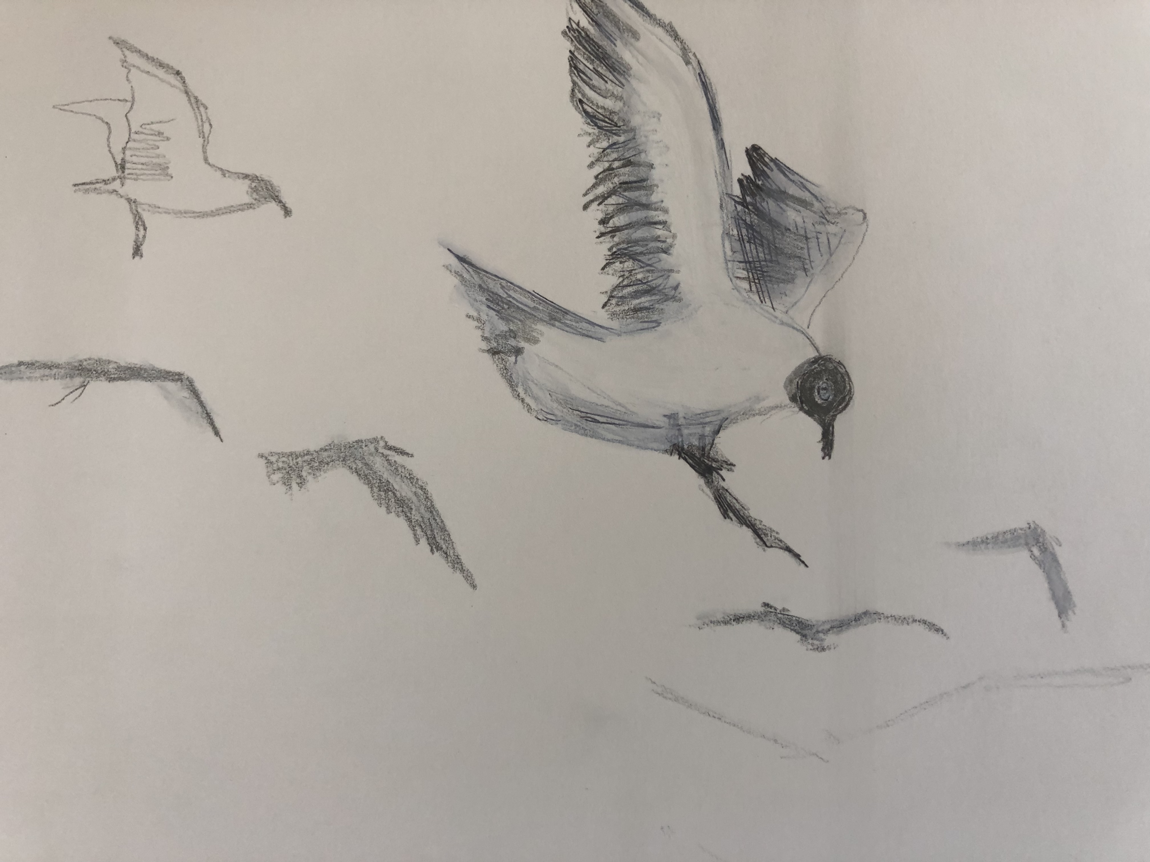 ink gulls forming patterns