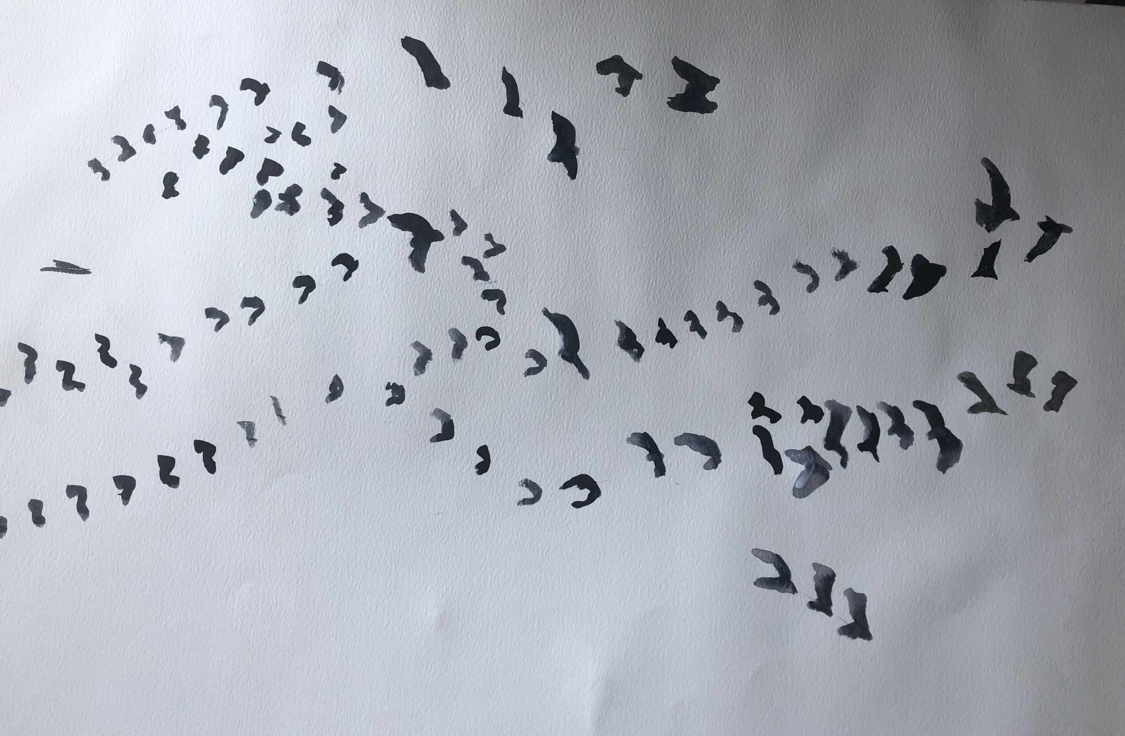 ink gulls in formations