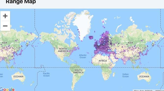 range map for gulls
